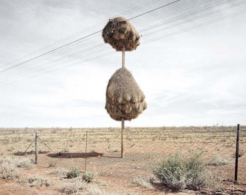 Dillon Marsh Le Républicain social désert de Kalahari.jpg