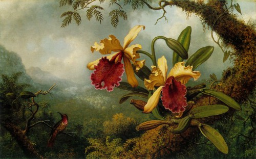 Martin_Johnson_Heade_-_Orchids_and_Hummingbird_ATC.jpg