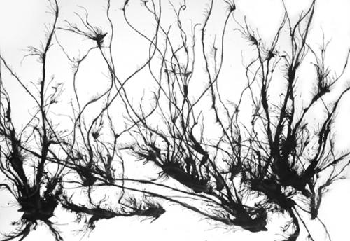 Gilles Balmet Mauvaises herbes Encre de Chine sur papier 70 x 100 cm 2008 2.jpg