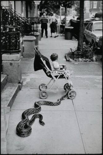Leonard Freed snake.jpg