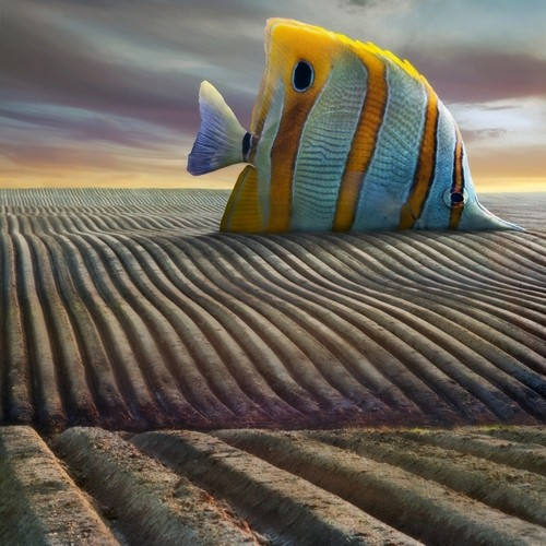 Dariusz Klimczak, big fish 2012_n.jpg