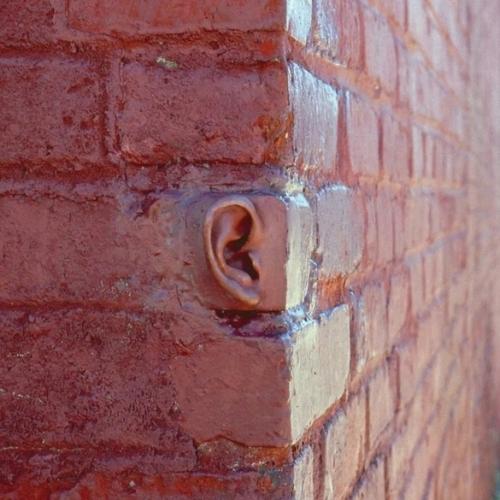 Michael Beitz Ear.jpg