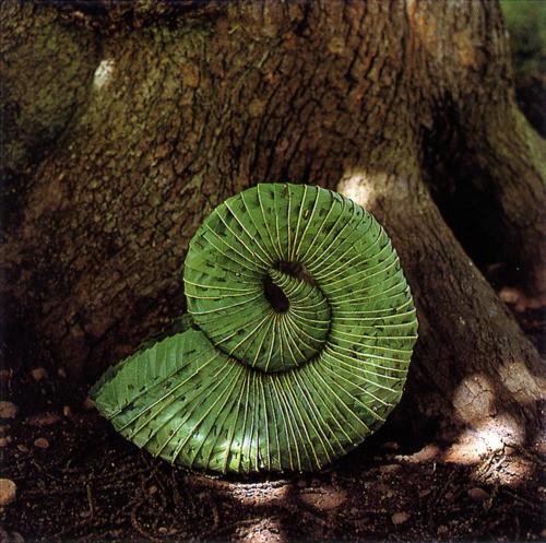 andy goldsworthy leaf horn 500.jpg
