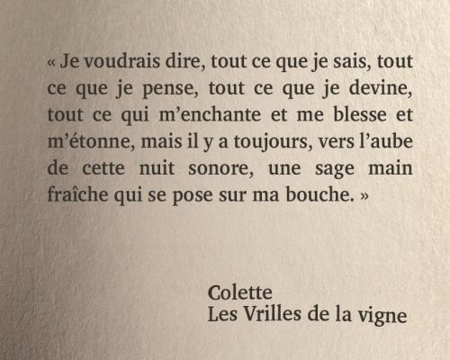 Colette_n.jpg