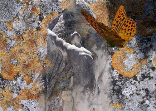 Lu Pélieu The Scream of a Butterflie_n.jpg