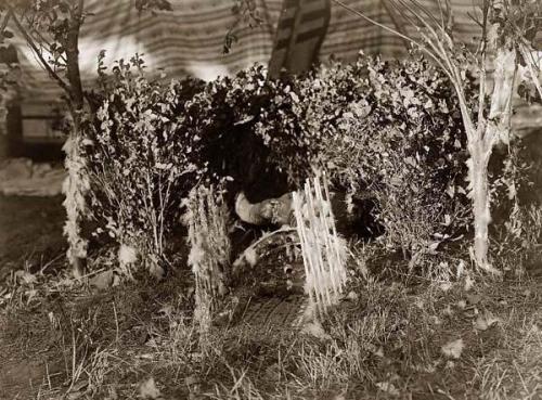 Edward S. Curtis Cheyenne Altar 1910.jpg