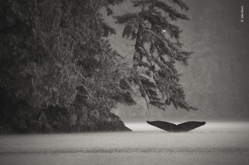 Jake Davis Humpback whale .jpeg