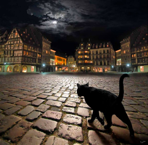 Igor Zenin Stray cat in Strasbourg.jpg
