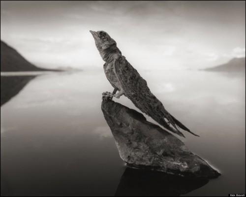 Nick Brandt-CALCIFIED-SWALLOW-900.jpg