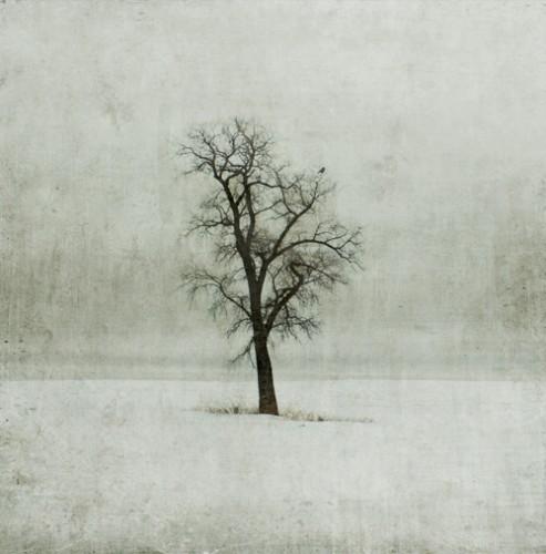 jamy heiden winter-solitude1.jpg