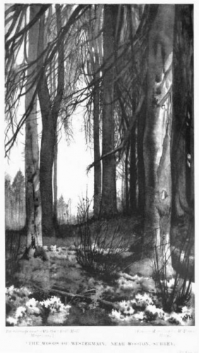 William Hyde the woods of westermain Surrey.jpg