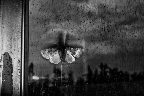 Farshid Tighehsa When I see a butterfly, I remember the poets. They gave to us a little chance to be alive. Mazandaran, Iran. July 15, 2015.jpg