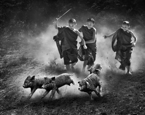 MIU ANTHONY KWOK Hong Kong Pig Race_.jpg