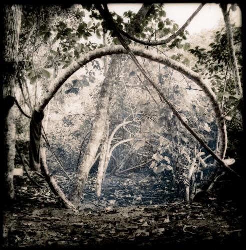 Victoria Ryan Circular_Tree.jpg