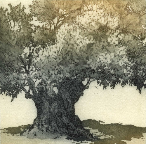 Chrissy Norman(British) Old Olive Tree etching.jpg
