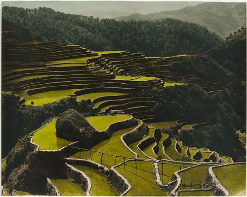 eduardo masferre Rice terraces near Bontok. Malegkong, Bontok, Mountain Province 1948.jpg