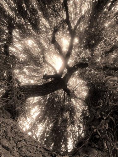 Izabella Ortiz naissance de l'arbre-lézard.jpg