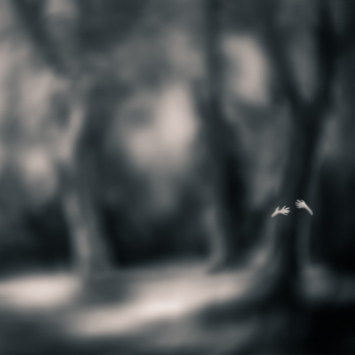 tami bone Cypress1.jpg