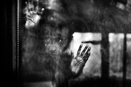 Sandra Štimac -Behind the glass1.jpg