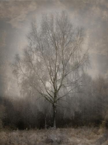 sans-titre arbre.png