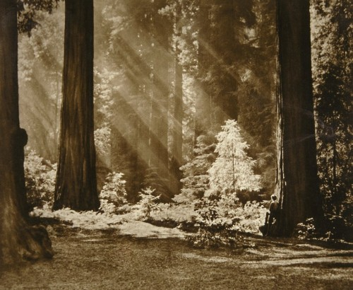 adolf fassbender Redwood Solitude 1965.jpg