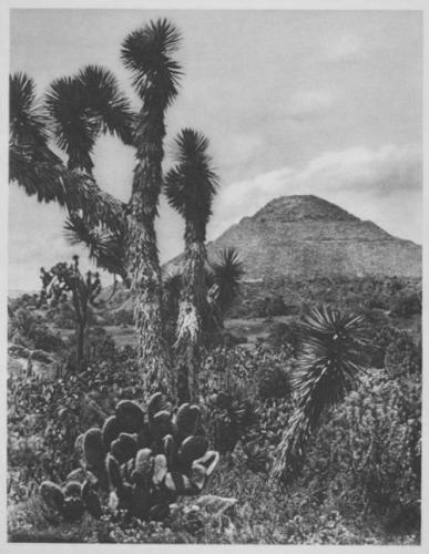 Hugo Brehme Mexico, 1924.jpg