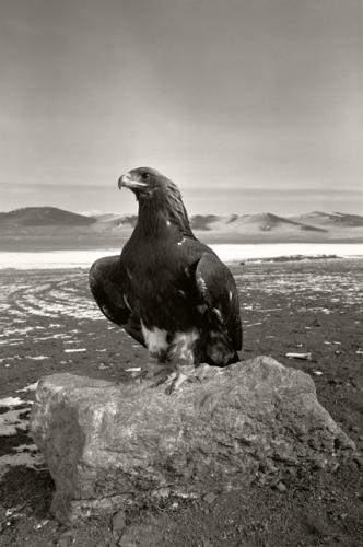 Hamid Sardar-Afkhami Altaï golden eagle.jpg