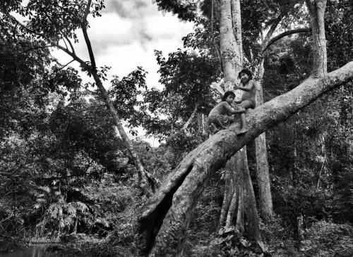 Sebastião Salgado les Awá Amazonie Brésil 2.jpg