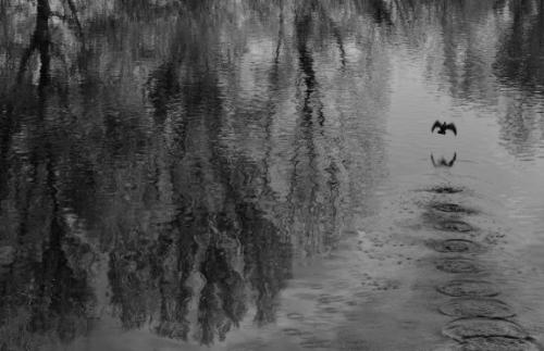 Sylvain Roiné envol d'un cormoran sur la Dordogne.jpg
