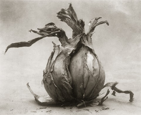 cy decosse onion-i.jpg