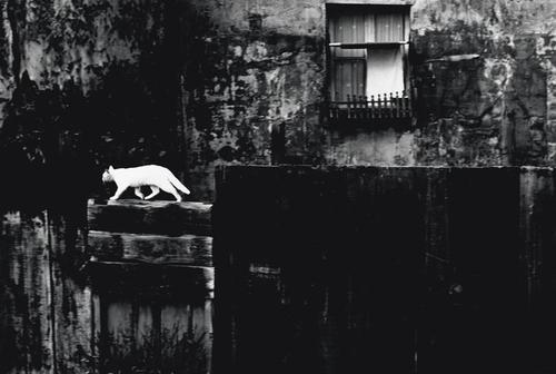 Piergiorgio Branzi, Paris, 1954.jpg