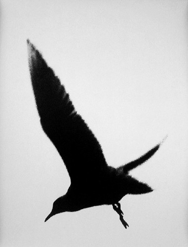 Edward Dimsdale seagull winter 1997.jpg