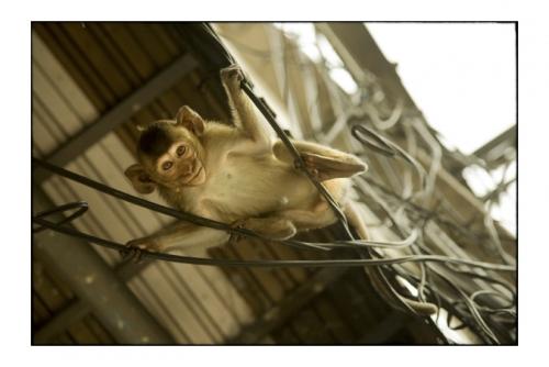 Simon Kolton monkey's city9.jpg