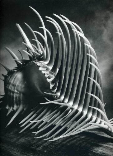 Andreas Feininger_500238.jpg