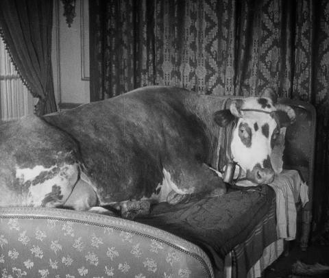 Still from Luis Buñuel's l'âge d'or 1930.jpg