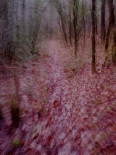 Promenant dans les bois (2).JPG