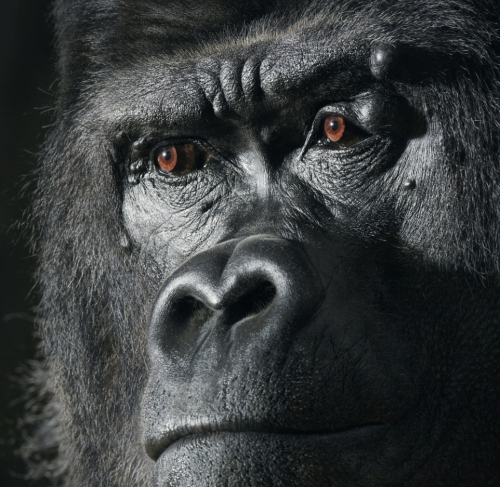 Tim Flach Untitled-note-4.jpeg