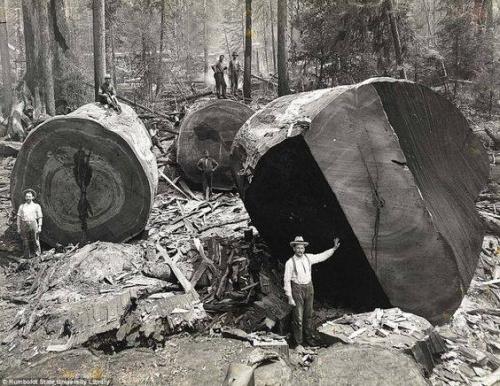 Bûcherons en Californie du Nord, 1915.n.jpg