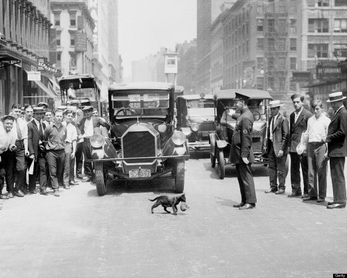 Traffic suspended to let a cat carrying a kitten cross the street. New York, July 1925._n.jpg