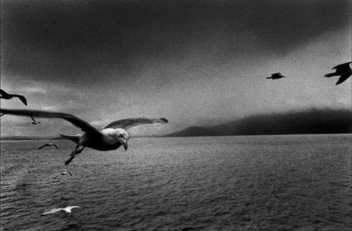 Joseph Kouelka - Seagull.png