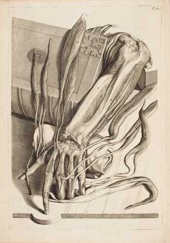 BIDLOO, Govert_1865_handbok.jpg