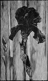 barry moser-iris.jpg