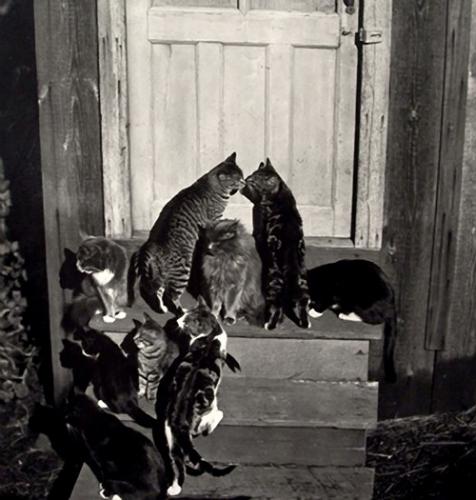 Edward Weston,  Une bande de chats par1944..jpg