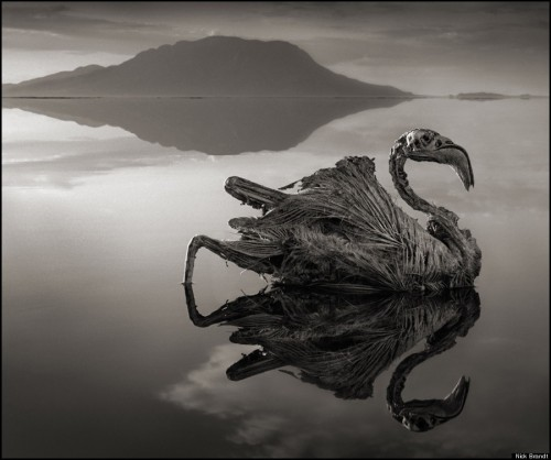 Nick Brandt lac natron Tanzanie.jpg