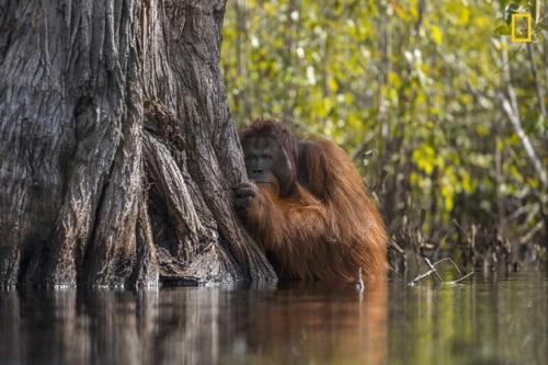 Jayaprakash Joghee Bojan Face to Face in a River in Borneo.jpg