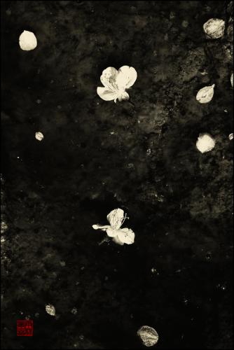 Blanka Mateno 2OI4 Light travels in dirt (I).png