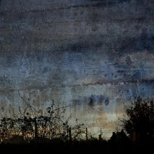 Troy Ruffels-Sparrow.jpg