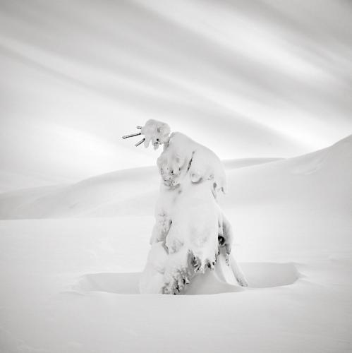 Maria Strömvik de la série winterscapes.jpg