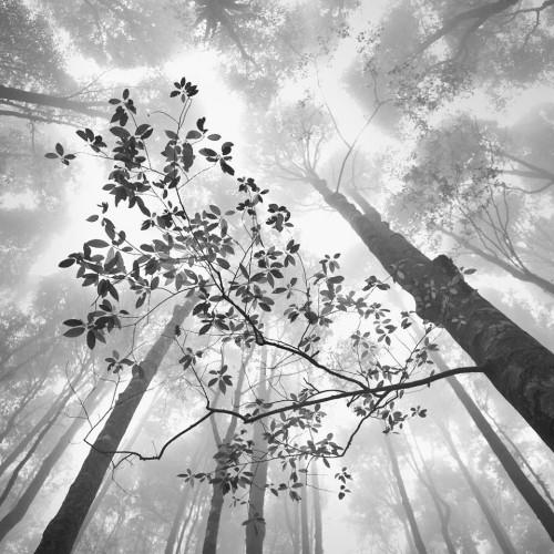 Hengki Koentjoro forest 2013.jpg