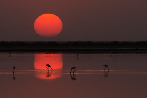 Kalyan Varma_Little Rann of Kutch._2011.jpg